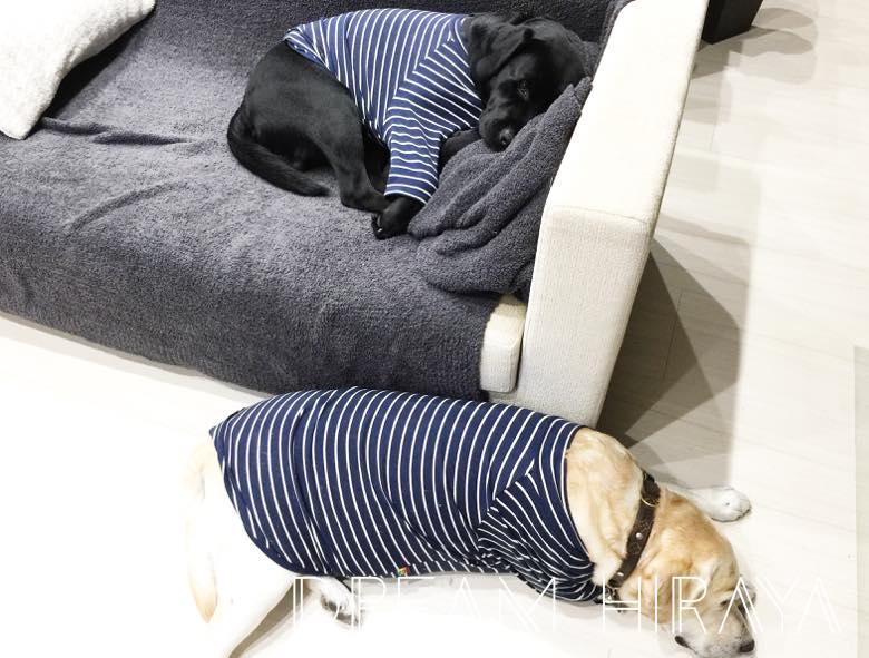 ◆おすすめの犬グッズ!おしゃれ&かわいい長袖のお洋服!大型犬(ラブラドール)用!◆