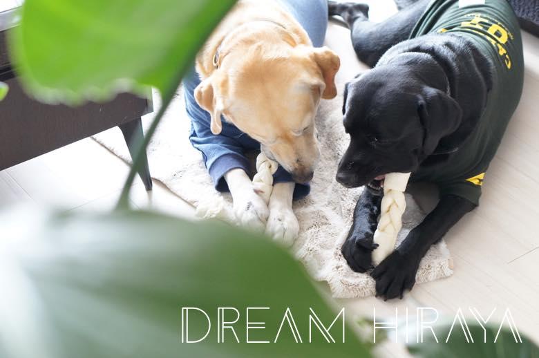 ◆おすすめの犬用おやつ!食べ比べ!どれが一番長持ちする!?ミルク味のビッグガム◆